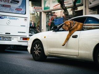 who let the dogs drive