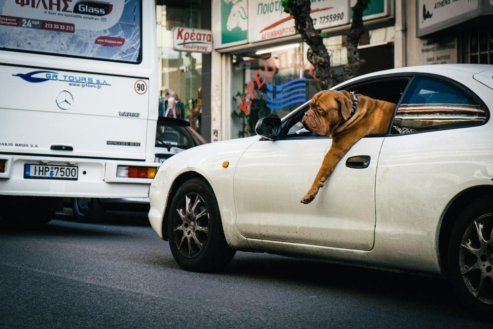 dog car athens